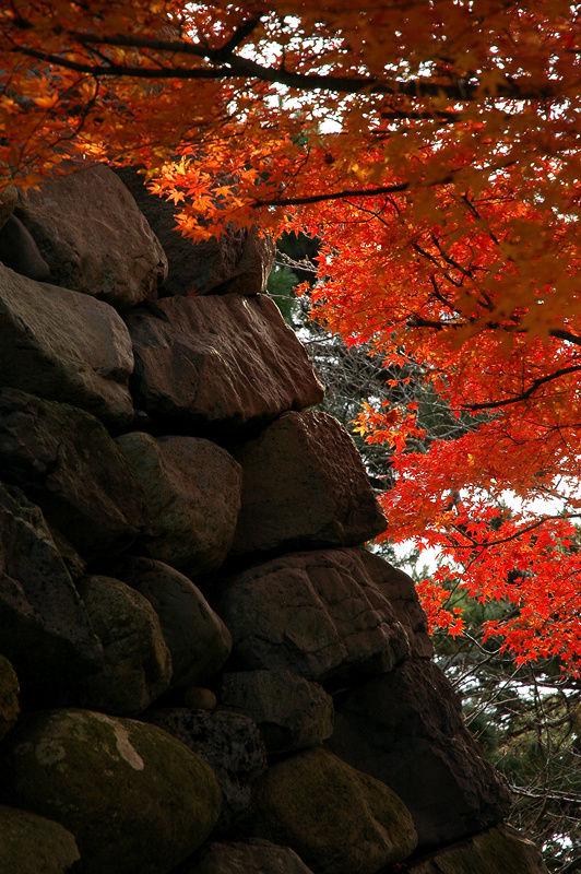Осень в замке Маруока Сакай, Япония