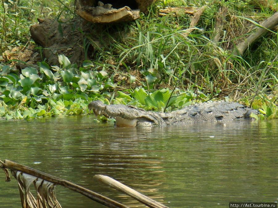 А в заводи нас поджидал крокодил...