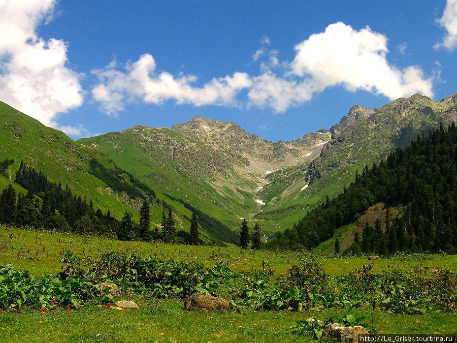 альпийские луга фото абхазия