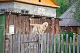 Никак не могли понять где простая маленькая собачка научилась лазить по заборам;)