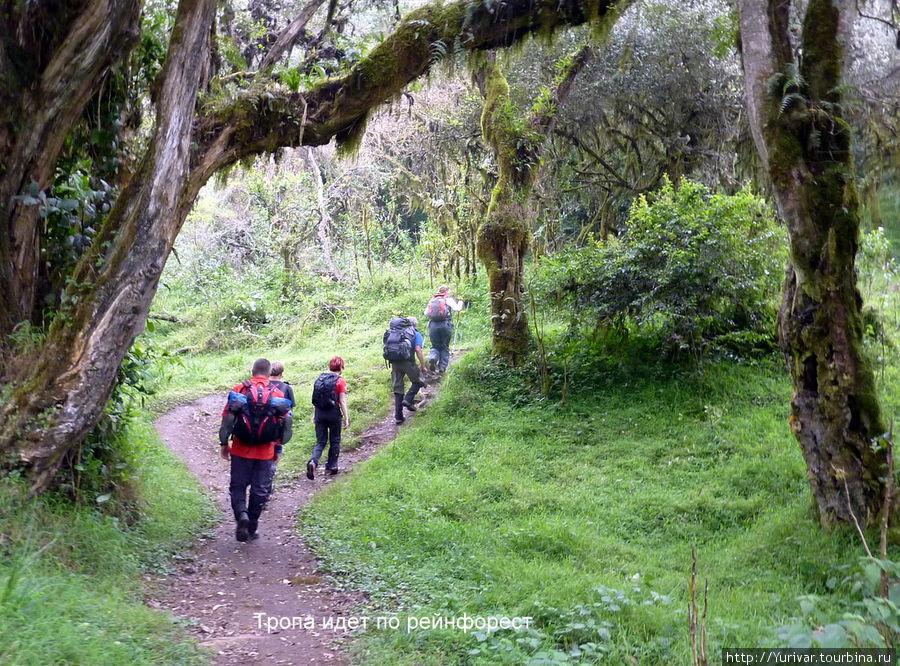 Тропа идет по рейнфорест — джунглям