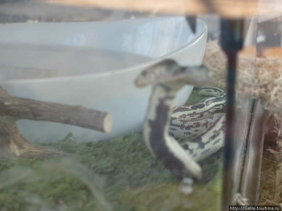 Двух головая змея.