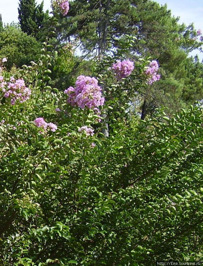 Сочи-2006. В парке Ривьера