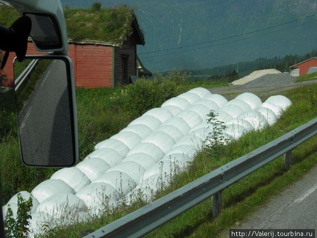 А тк хранится сено в этих краях