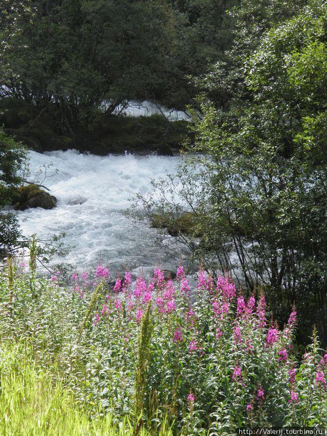Речка, рожденная ледником Бриксдаль