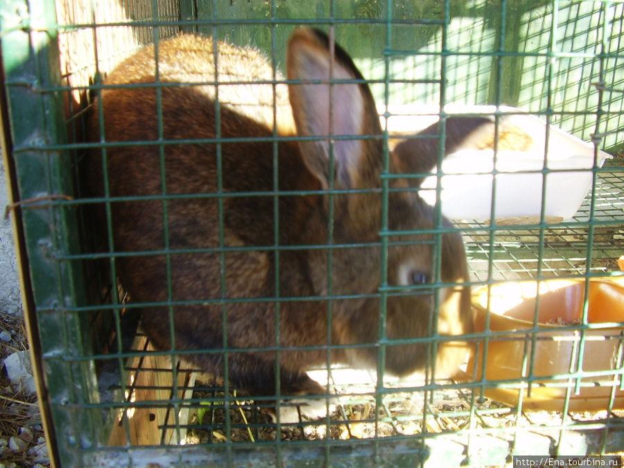 Экскурсия в Геленджик. Сафари-парк. Кролик