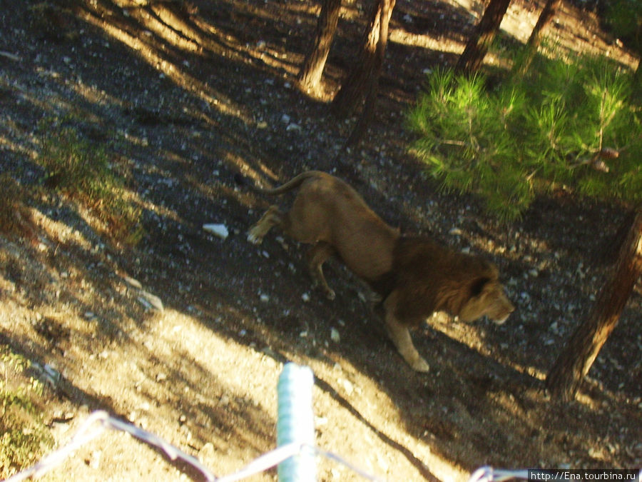 Экскурсия в Геленджик. Сафари-парк. Бегущий лев
