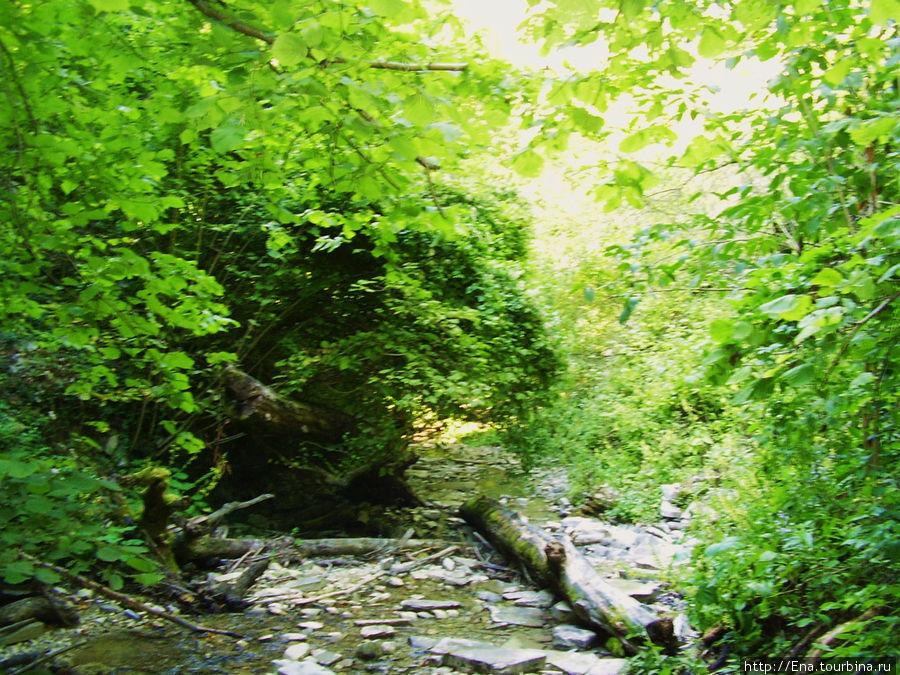 Экскурсия на Пшадские водопады. Зелень, скалы и вода