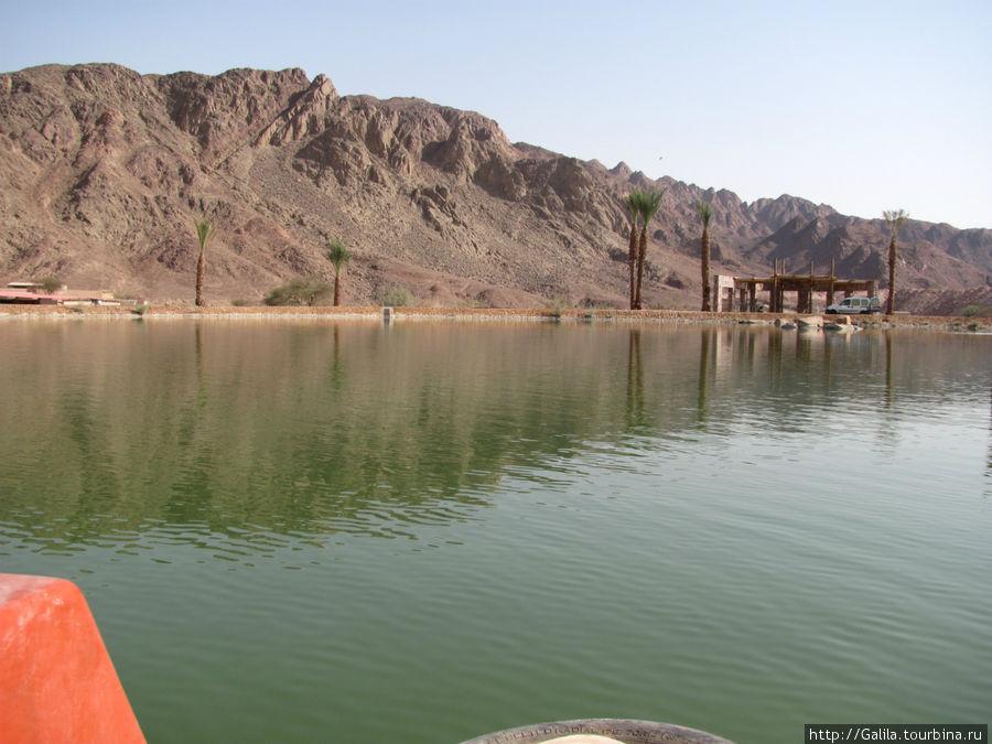 Озеро парка.