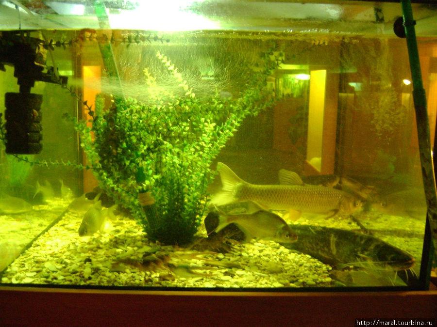 Куда рыбы, туда и рак с клешнёй
