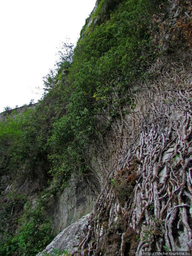 как в джунглях, стены, поросшие лианами