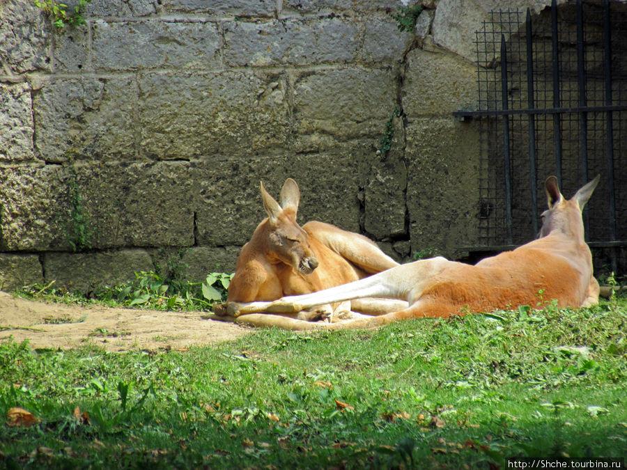 В цитадели настоящий зоопарк, есть кенгуру, тигр, лев, очень много видов приматов и птиц