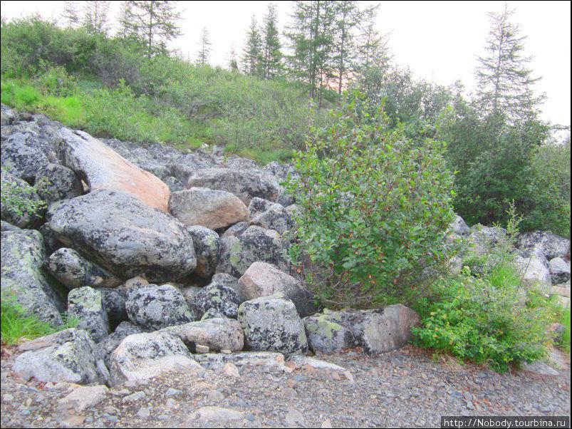 Эти камни — явно озёрные. Неужели когда-то уровень озера Джека Лондона был столь высок?!!