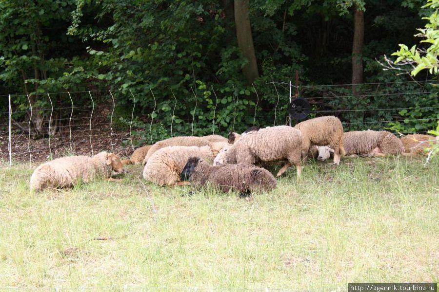 Овцы — блеяли они отвратительно, пахли тоже так себе
