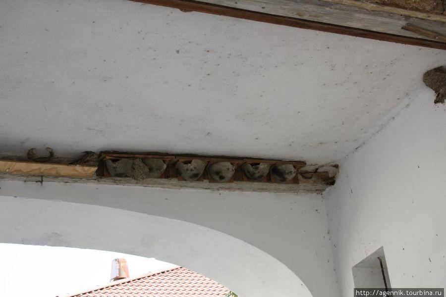 Ласточкины гнезда ydl воротами монастыря