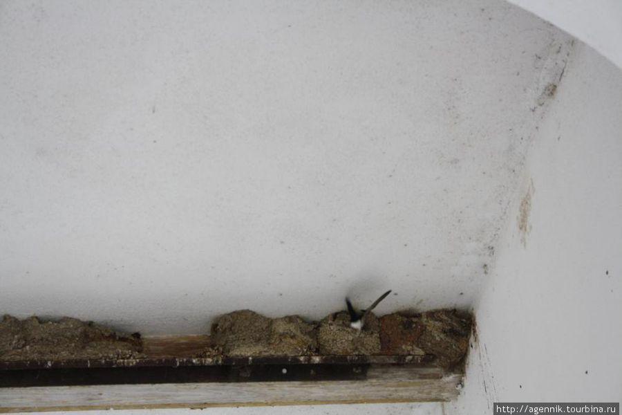 Здесь хорош видна кормящая птенцов ласточка
