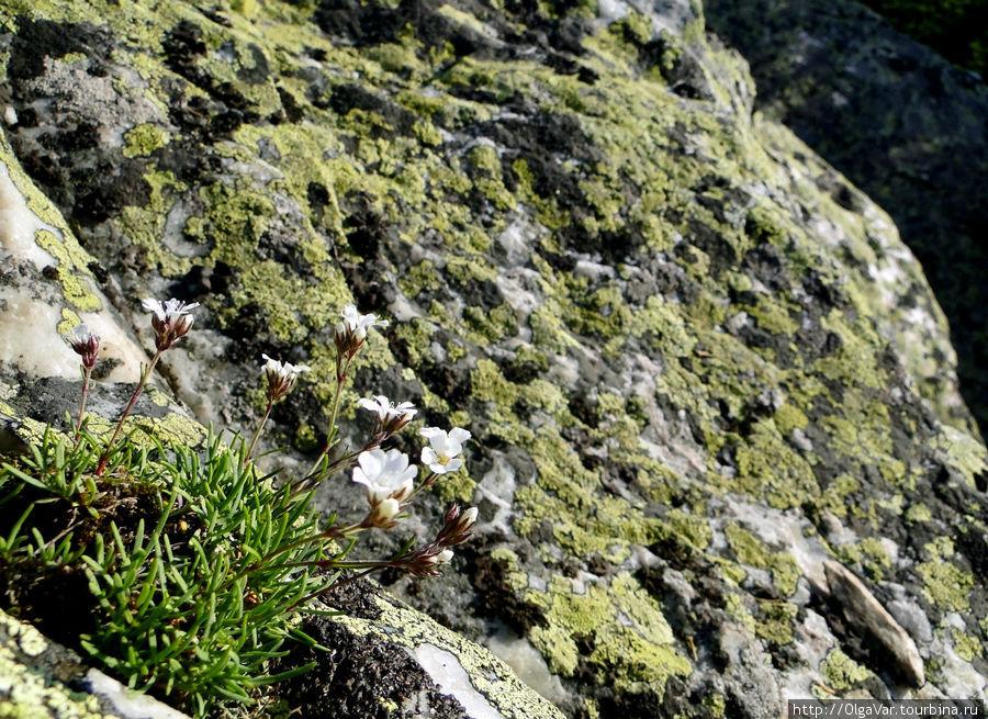 Даже на вершине радуют глаз цветы Златоуст, Россия