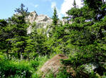 Муравейники в лесу у подножья почти в человеческий рост