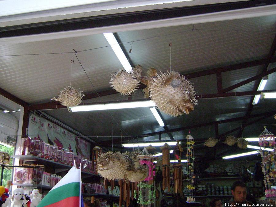 Колючая рыба — оригинальный подарок для сварливых соседей