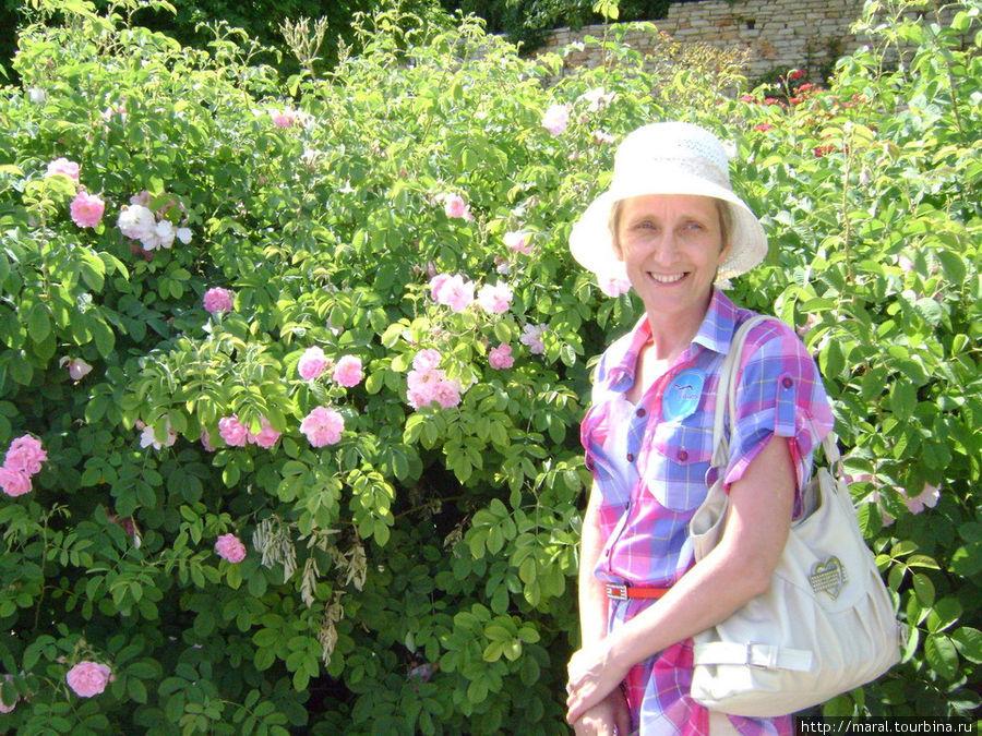 Болгарская масленичная роза