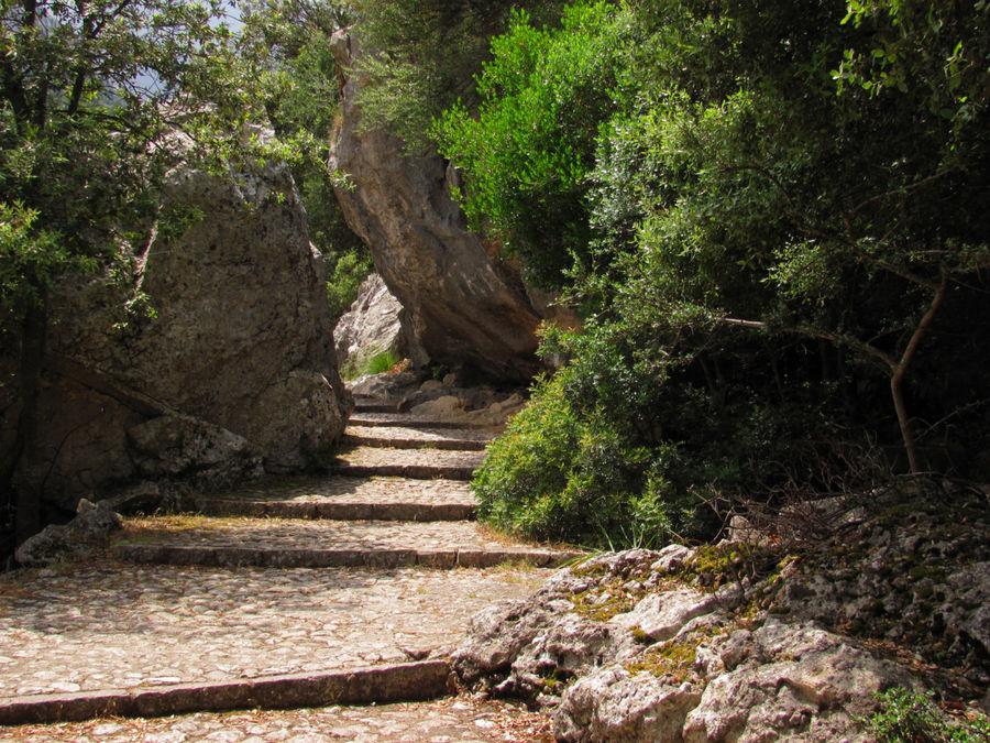 А добраться до креста можно извилистыми тропавми ботанического сада