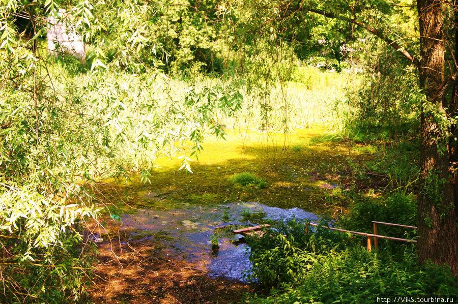 Пруды- предмет бывшей гордости помещиков. Ныне заросли, не чищены. Осталось только напоминание о  чистых прудах усадьбы.