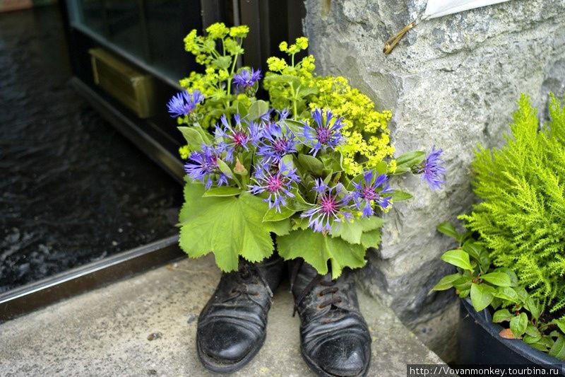 Такой горшочек для цветов стоит перед сувенирным магазином в Килфеноре.