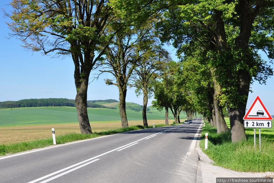 При подъезде к Граду — участок старой дороги, от которой строители автобана сохранили старые липы.