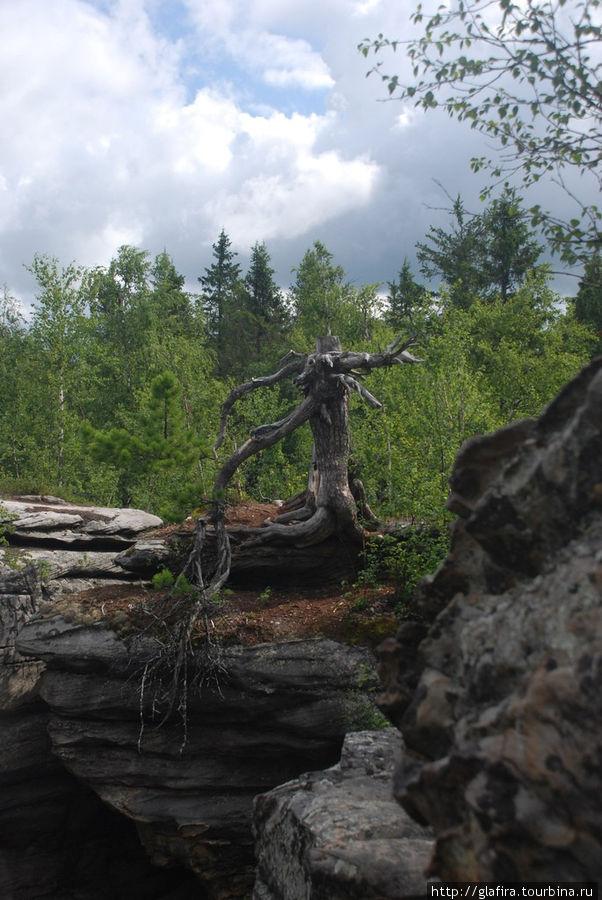 Причудливые формы деревьев.