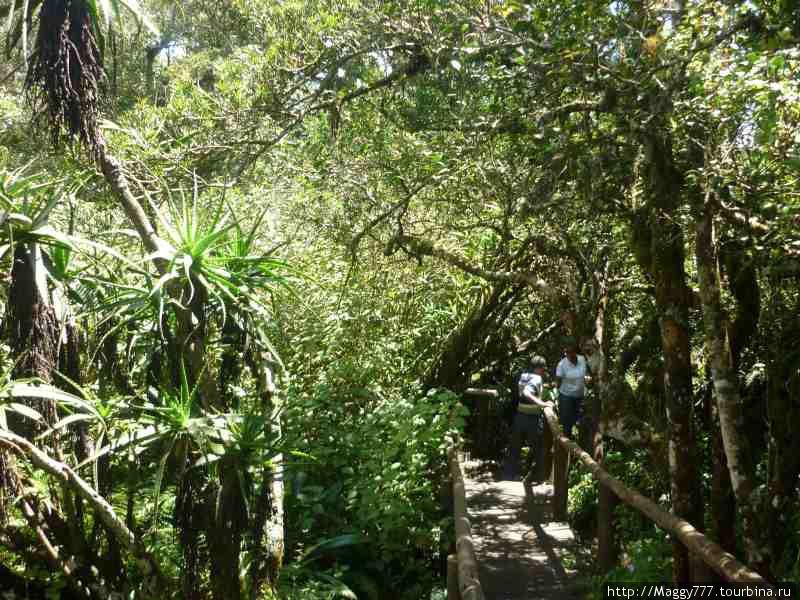 И  тропический лес впридачу.
