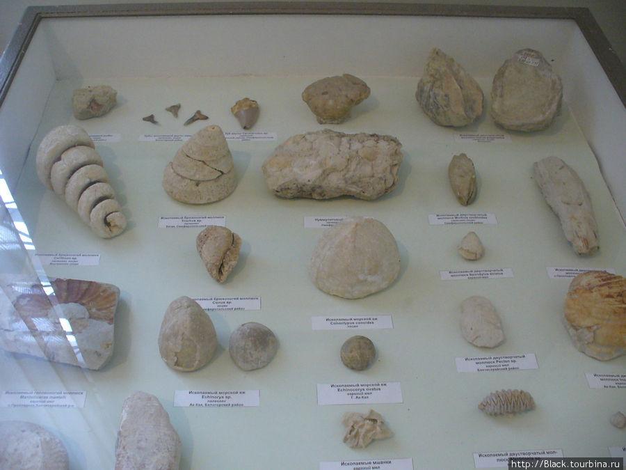 «Зал палеонтологии и геологии»