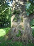 Монументальное деревце