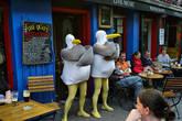 Seagull's