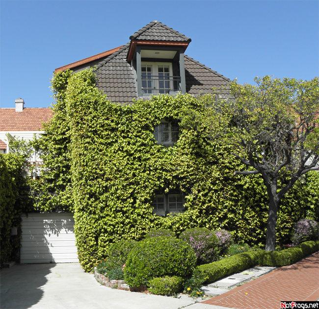Очень многие дома озеленены таким вот образом