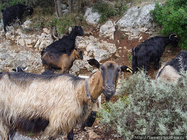 местные козлы