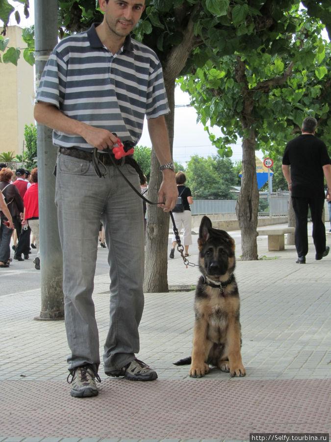 Этот милый пес с заложенным ушком, встречался нам еще несколько раз:)