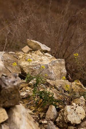 Какую тайну хранят эти камни?