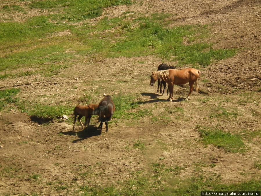 на горных склонах пасутся лошадке там, где зимой со свистом будут скатываться лыжники