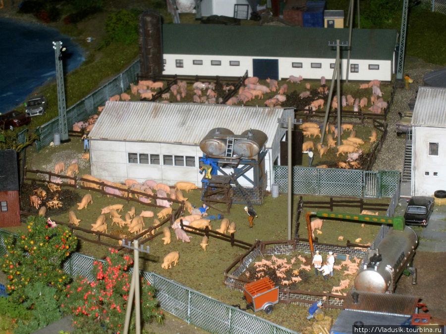 Это свиноферма, там живут большие свиньи и маленькие поросята