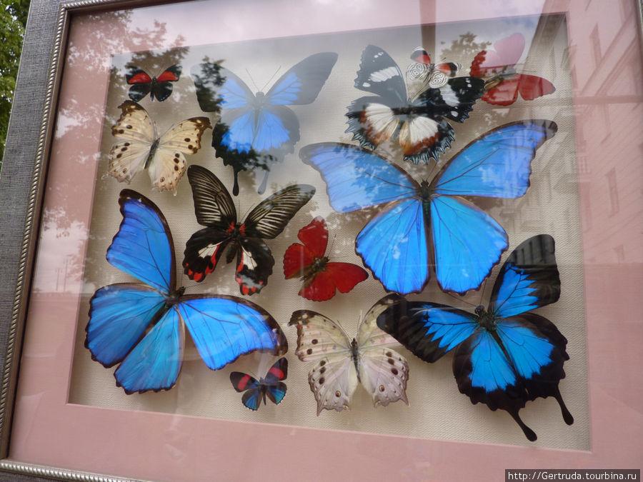 Такие картины с бабочками продавали на лотке. Очень красиво!