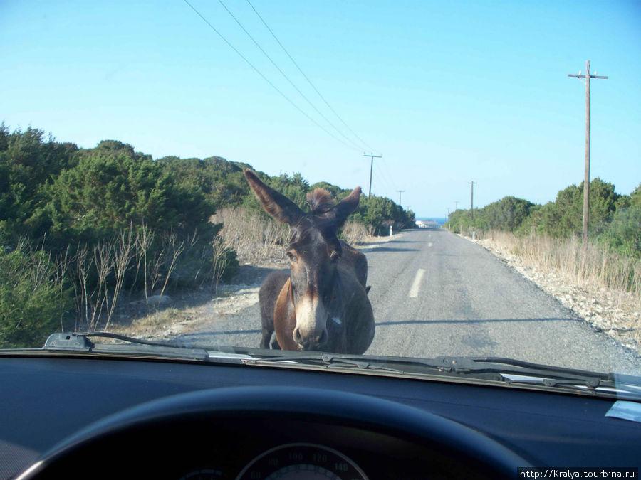 А вот и ослики по дороге на мыс Карпаз.