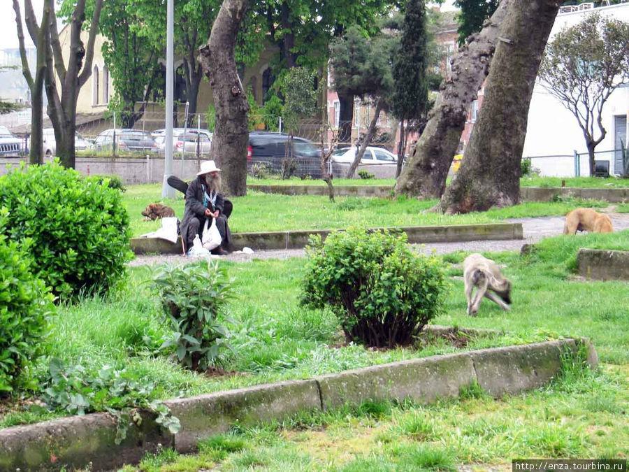 Гитара, шляпа и стая собак. Вот такие бродяги встречаются в сквере перед Сиркеджи.