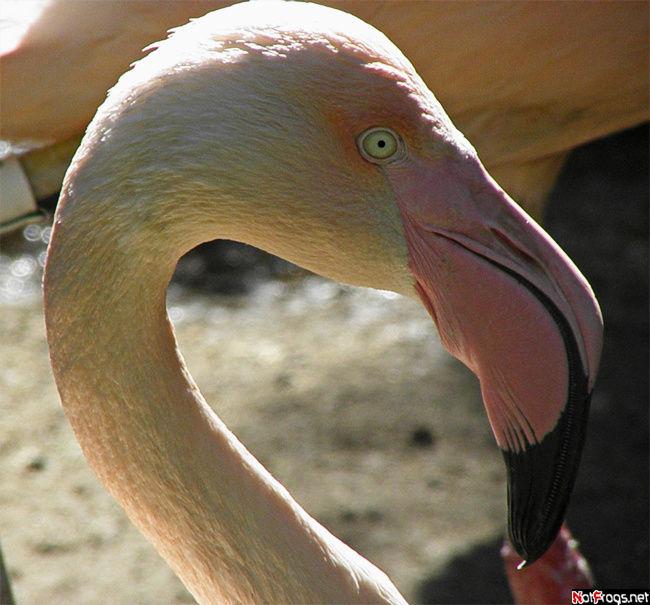 Очередной фламинго, на сей раз бело-розовый