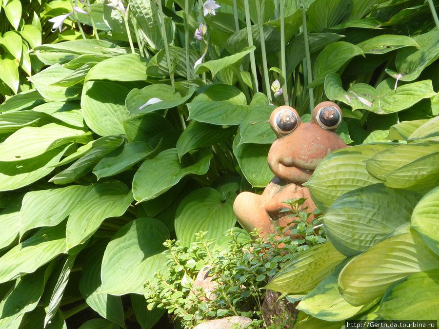 Лягушка в траве