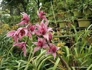 Орхидеи!