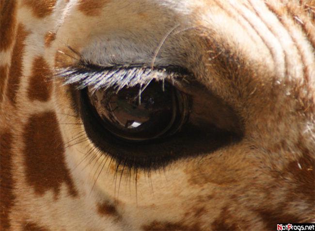 Ах, эти глаза!