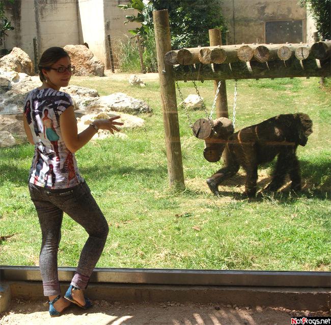 На фоне гориллы