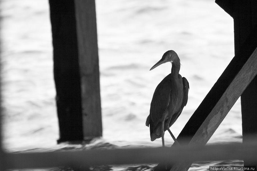 Соседями в отеле являются вот такие симпатичные птички, которых можно увидеть под домиками.