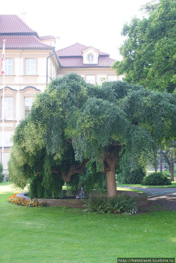 Малый Фюрстенбергский сад
