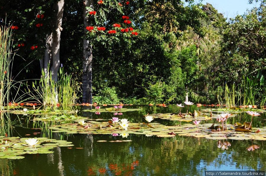 Отели на ботаническом саду